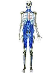 腰痛の原因筋膜