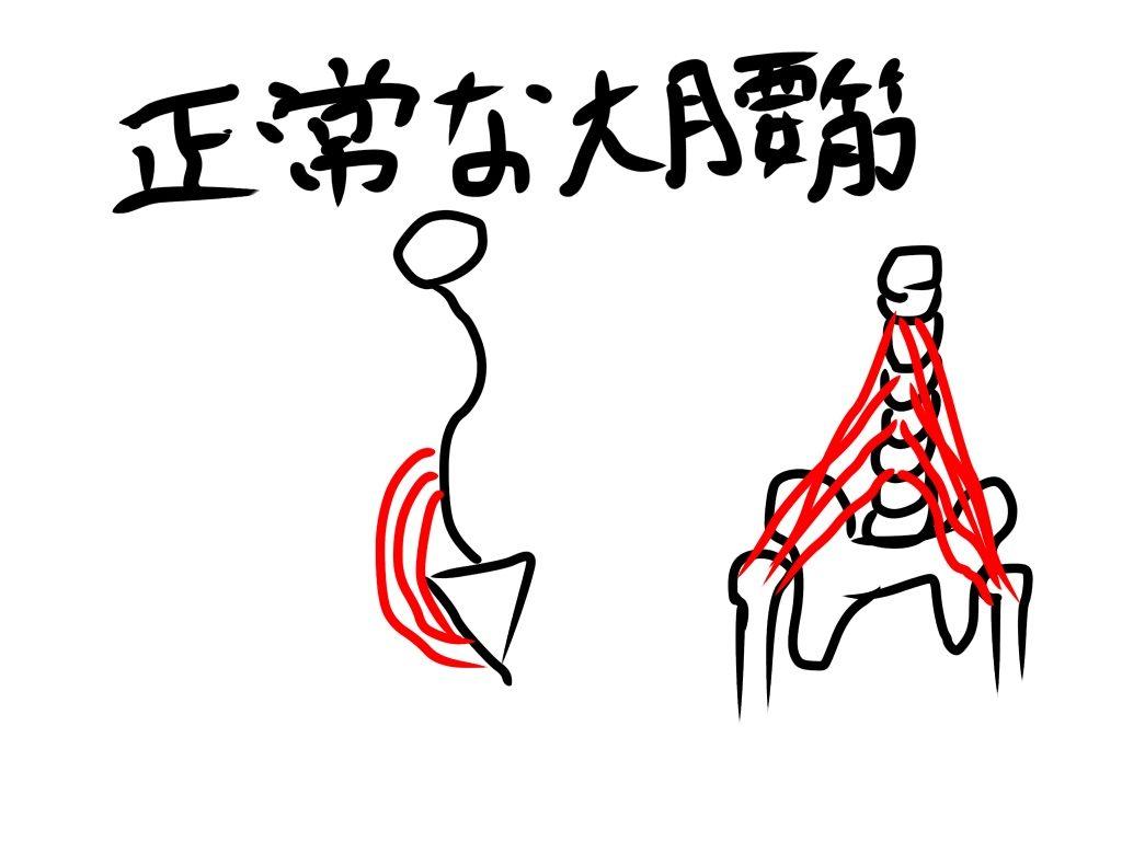 正常な大腰筋イラスト