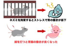 ネズミ鍼の実験解説
